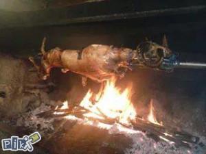 svinje jagnjad