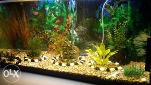 akvarij za ribice 110l juwel